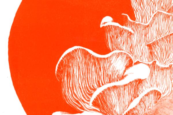mushroom-featured-marie-ducom-2015