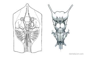 skate-anatomy-02-marie-ducom-2015