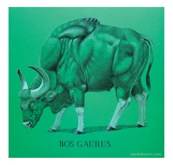 Bos-Gaurus-01-Marie-Ducom-2016
