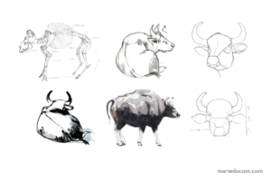 Anatomical and observational studies