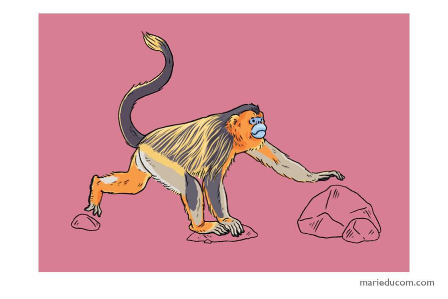 Primate-01-Marie-Ducom-2018
