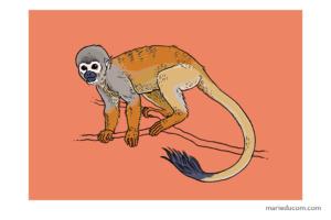 Primate-03-Marie-Ducom-2018 bis