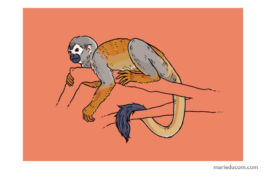 Primate-04-Marie-Ducom-2018