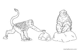 Primate-05-Marie-Ducom-2018