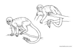 Primate-06-Marie-Ducom-2018