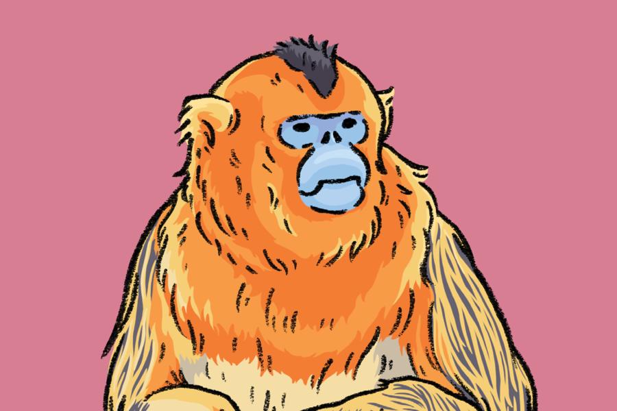 Primate-cover-Marie-Ducom-2018