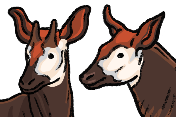 Okapi-featured-Marie-Ducom-2018