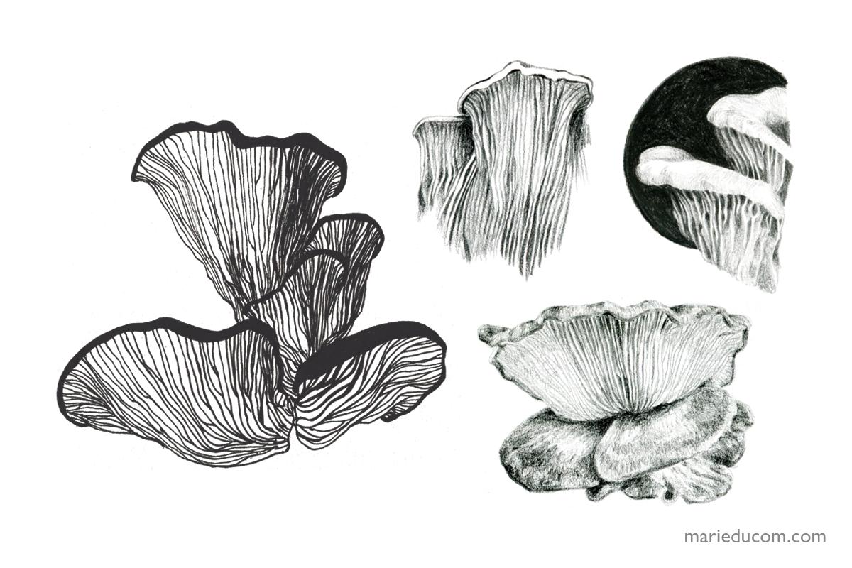 mushroom-sketches-01-marie-ducom-2015