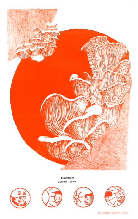 oyster-mushroom-marie-ducom-2015