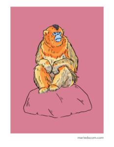 Primate-02-Marie-Ducom-2018