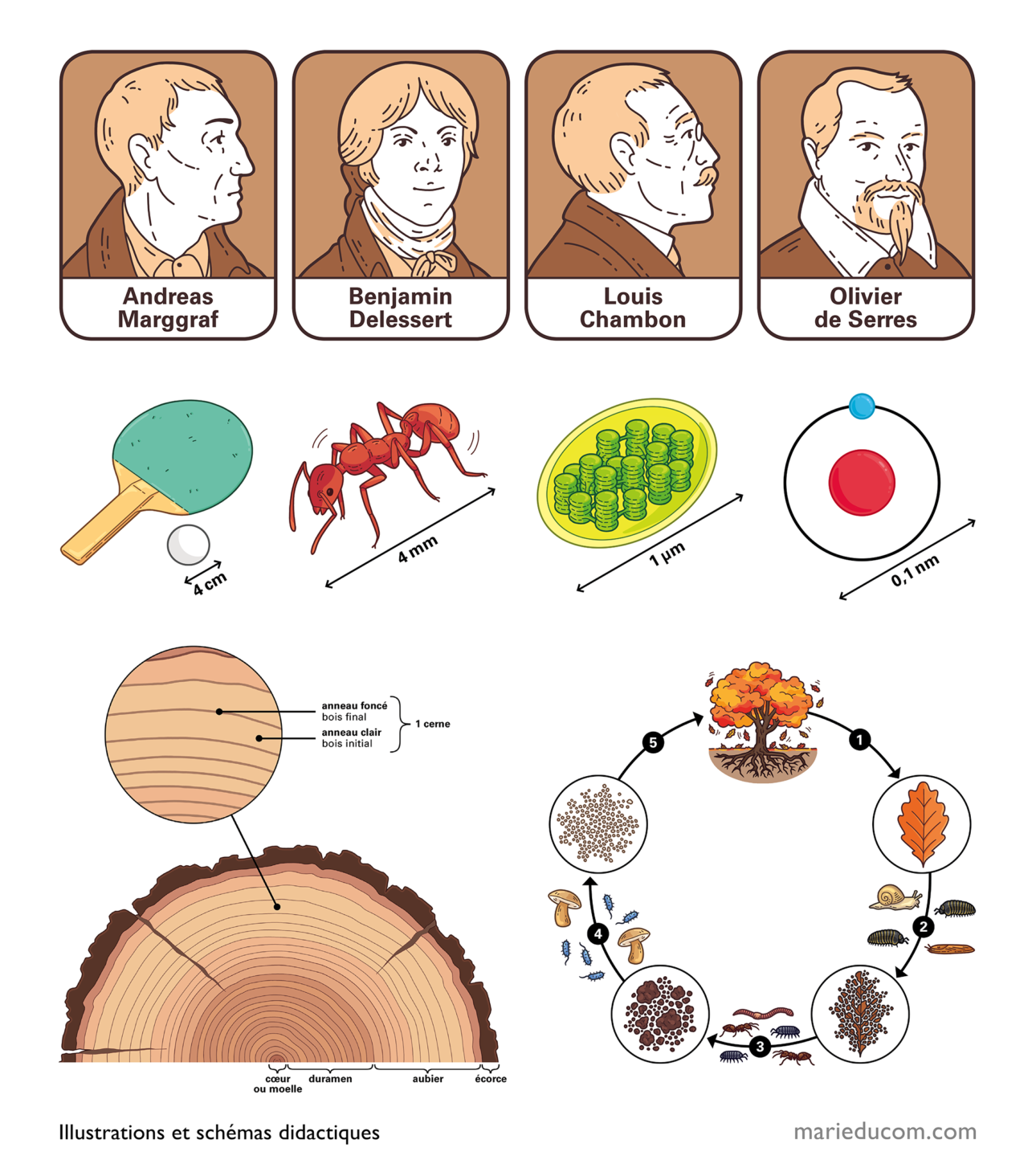 Projet-MERITE-illustrations 3bis-Marie-Ducom-2021